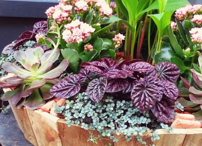 Stunning pots arrangement at Gilles Pothier