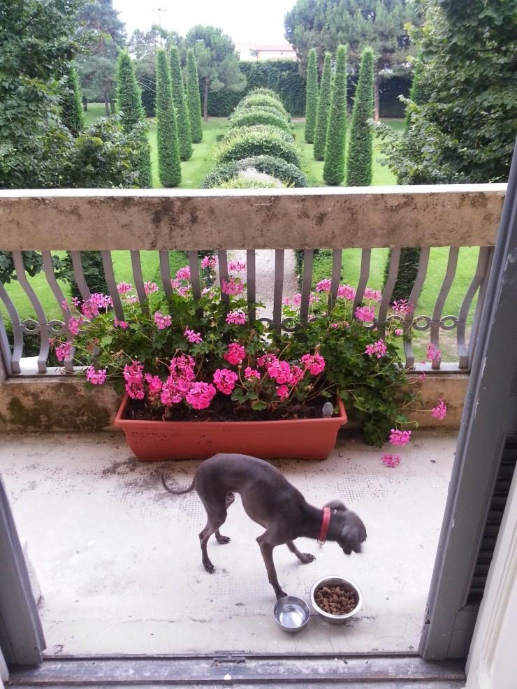 Villa Verganti Veronesi - garden from the baclony, dining al fresco