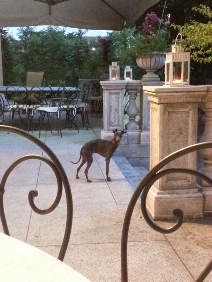 Villa Verganti Veronesi - the terrace