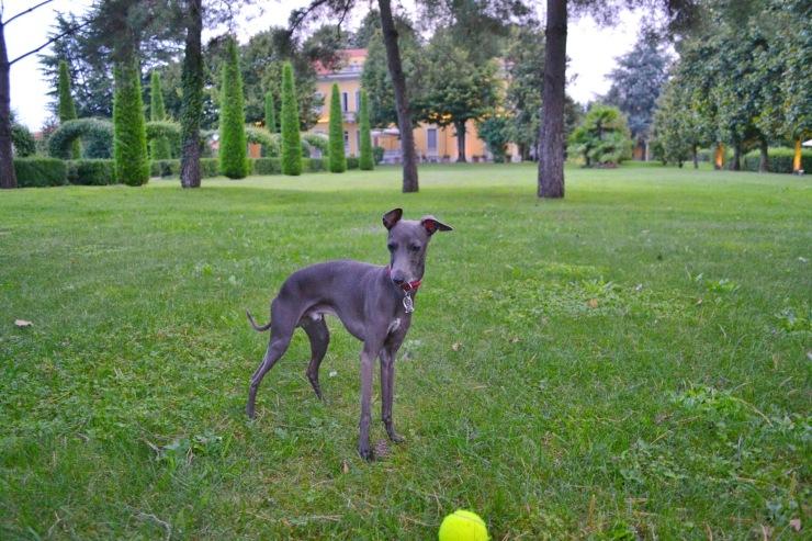 Villa Verganti Veronesi  - the lawn with a special guest Brando