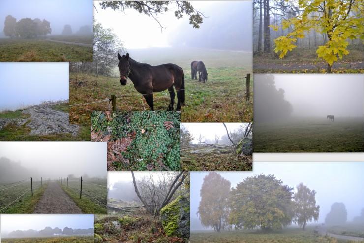 Fog collage 2