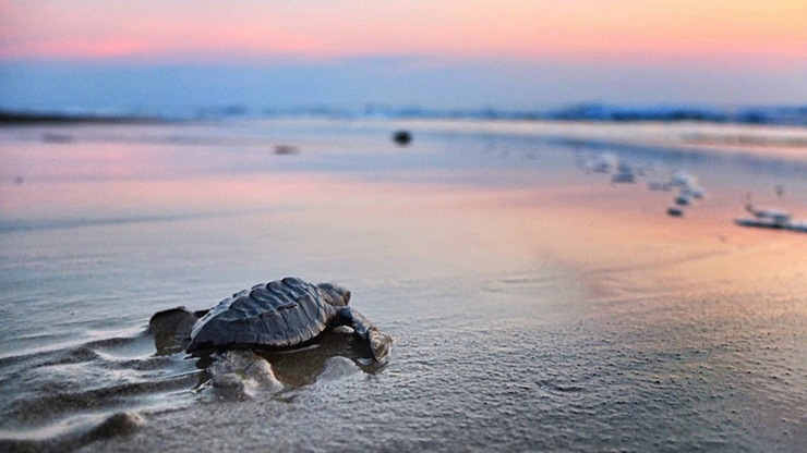 turtle_sunset