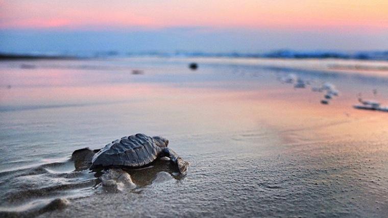 turtle_sunset